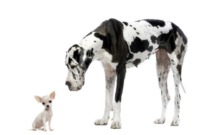 Das Verdauungssystem des Hundes