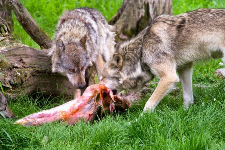 Wild Wilderness Dog Food